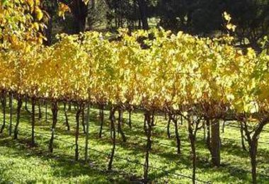 Explore the Geographe Region wineries